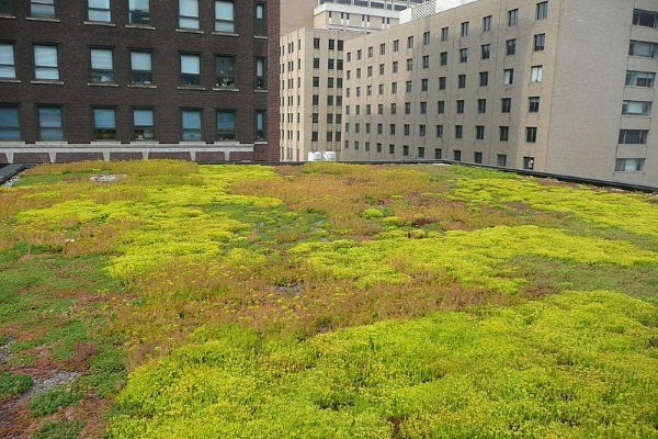 a simple commercial flat green roof