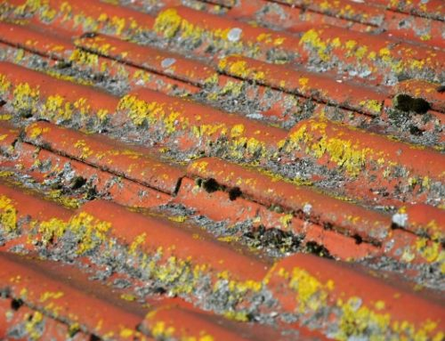 Clinton Township Home Tips: Can You Clean Black Algae Roofs By Yourself?